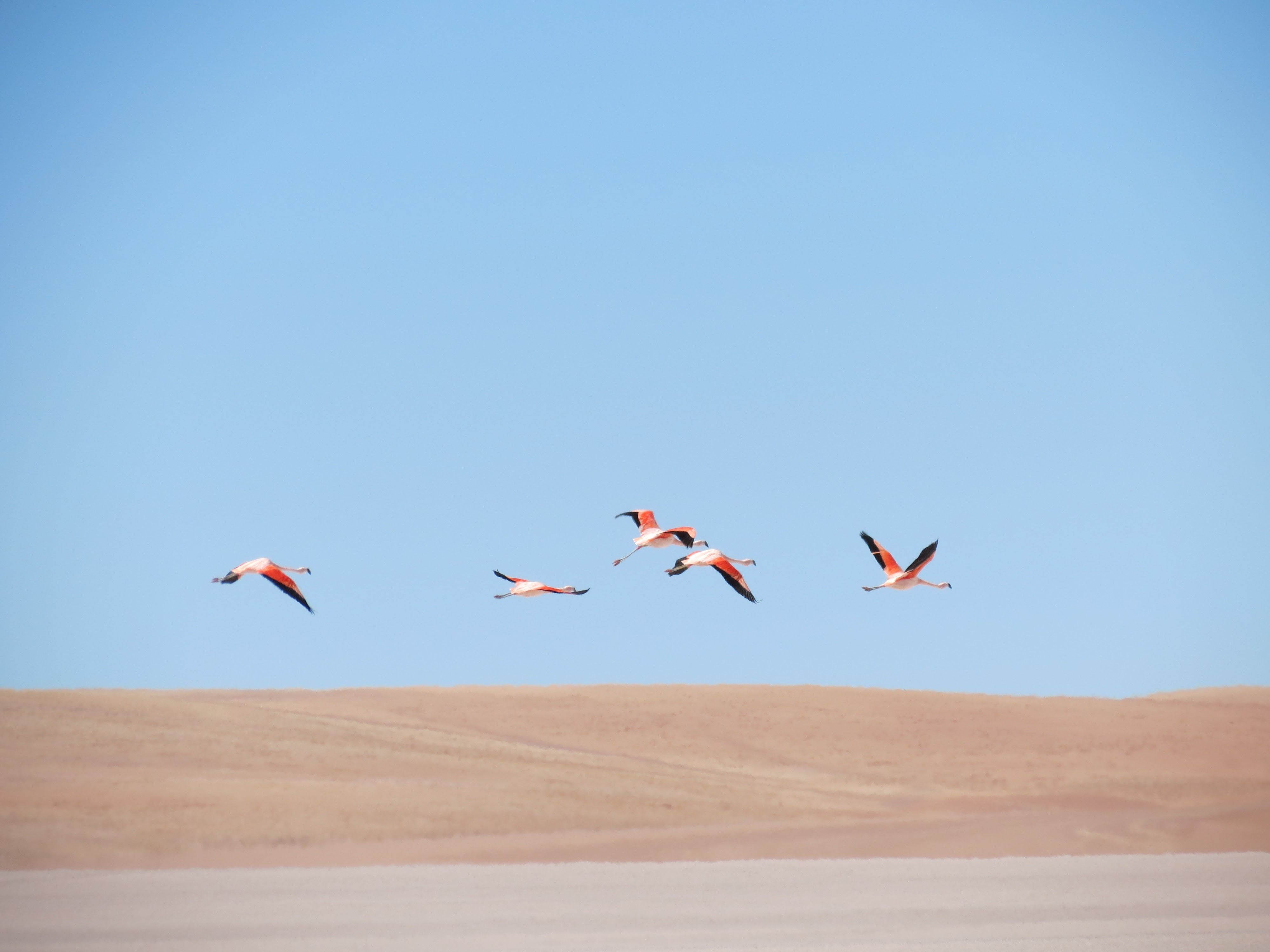 Our excursion from San Pedro De Atacama to Uyuni