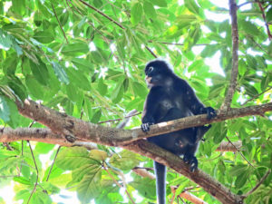 Monkey - Perhentians - Malaysia