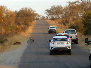Self Drive Kruger National Park