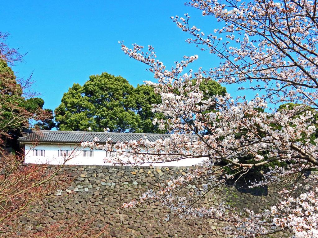 Imperial Palace Sakura Tokyo - Japan
