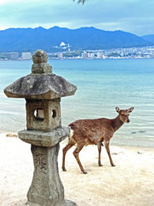 Miyajima Deer, Japan