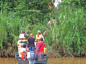 Kinabatangan River Safari - Elephant Spotting