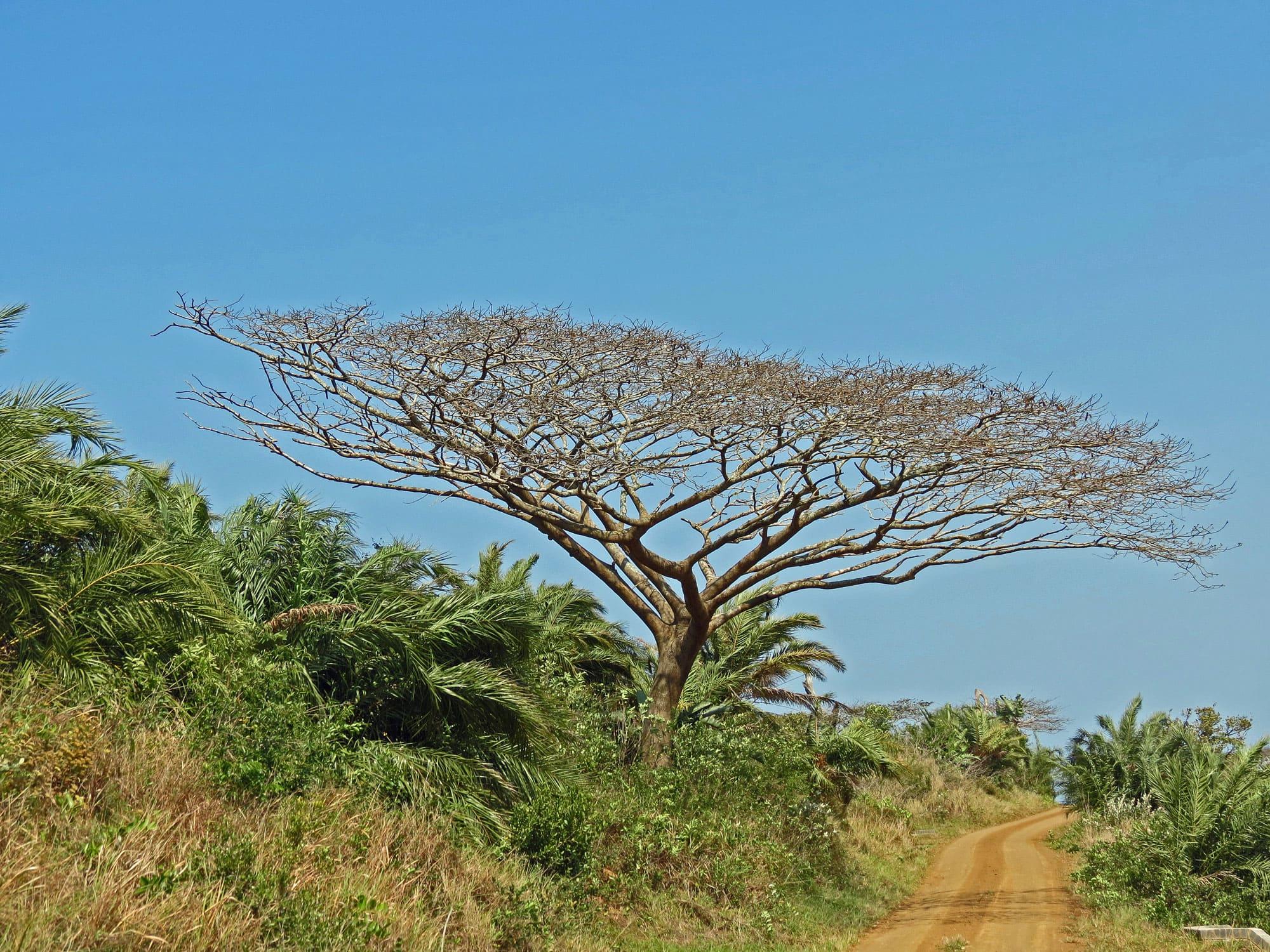 Hluhluwe National Park South Africa