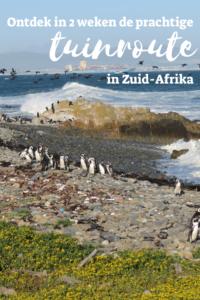 reisverslag tuinroute Zuid Afrika