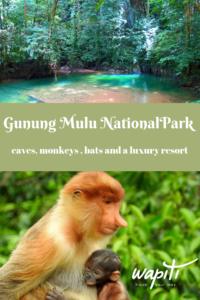 Mulu caves Borneo