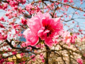 Nishinomaru garden Osaka, Japan