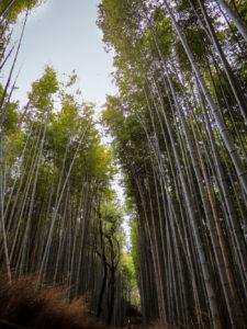 Bamboo Grove Arashiyama, Kyoto, Japan
