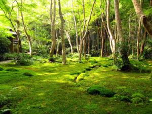 Gioji Temple Garden, Arashiyama, Kyoto, Japan