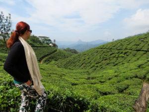 Tea Plantations Munnar, India