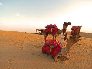 Camel Ride Jaisalmar Thar Desert