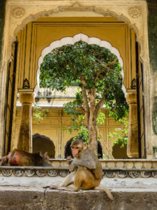 Monkey Temple Jaipur, India
