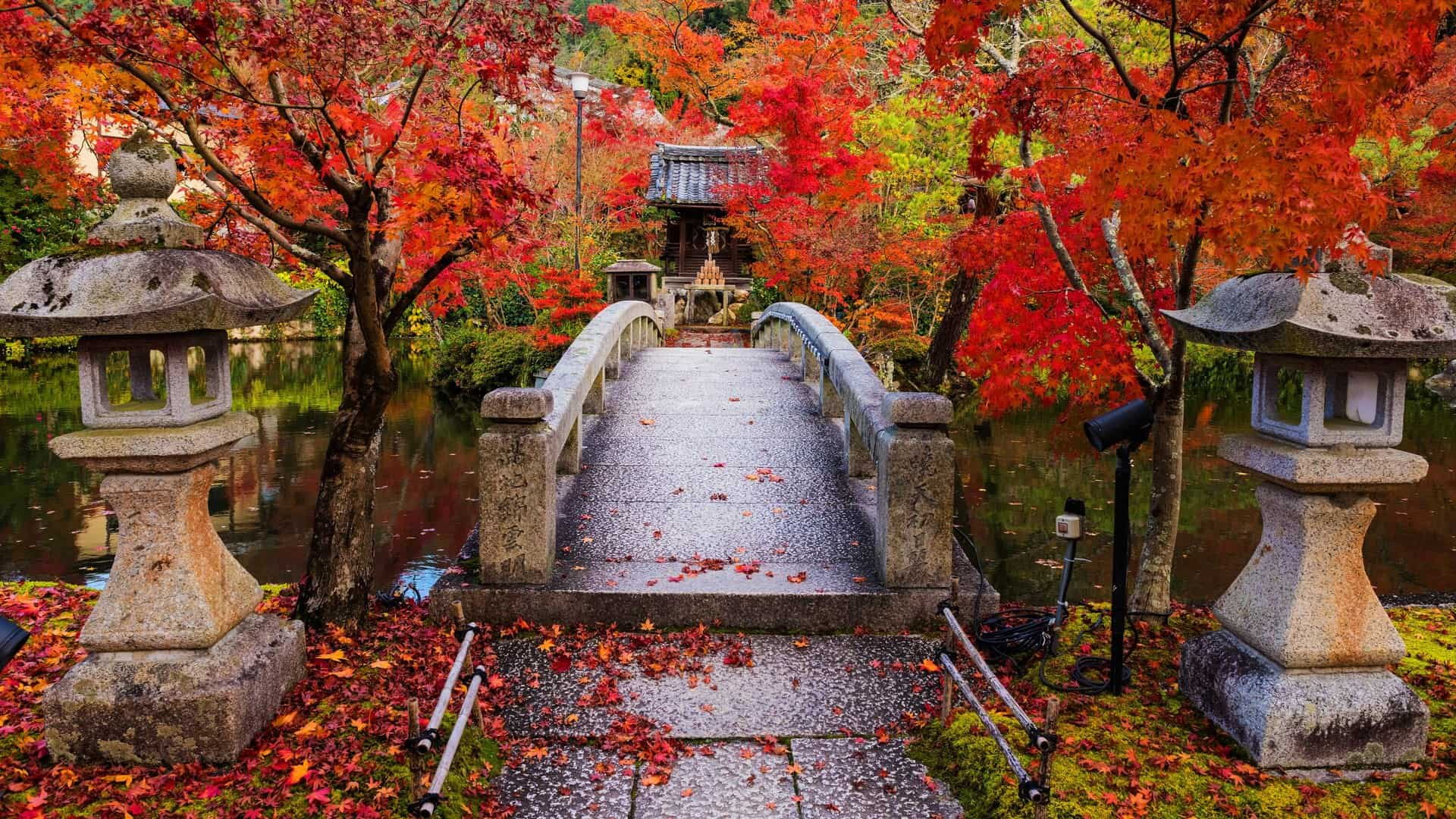 Where to stay in Kyoto: a complete guide