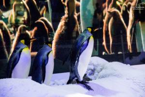 Ski Dubai Penguin
