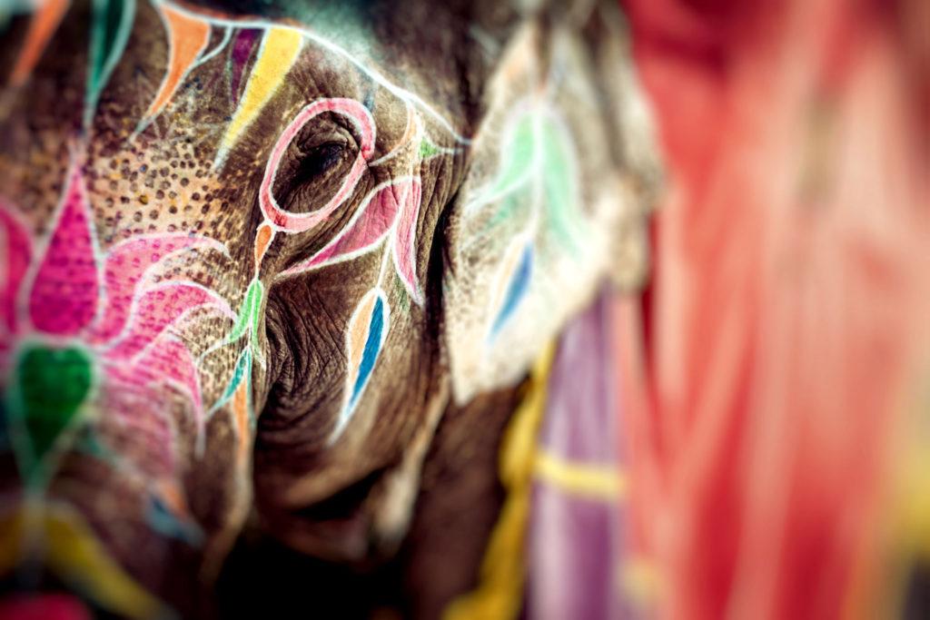 Elephant Festival Jaipur
