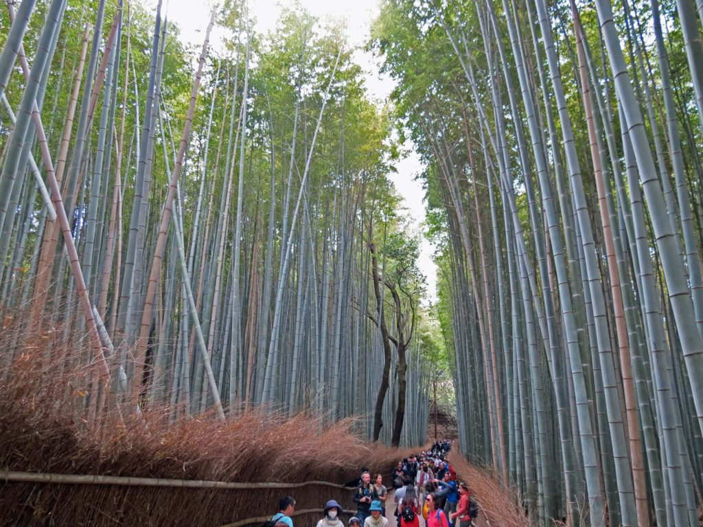 Kyoto Arashiyama Bamboo Forest