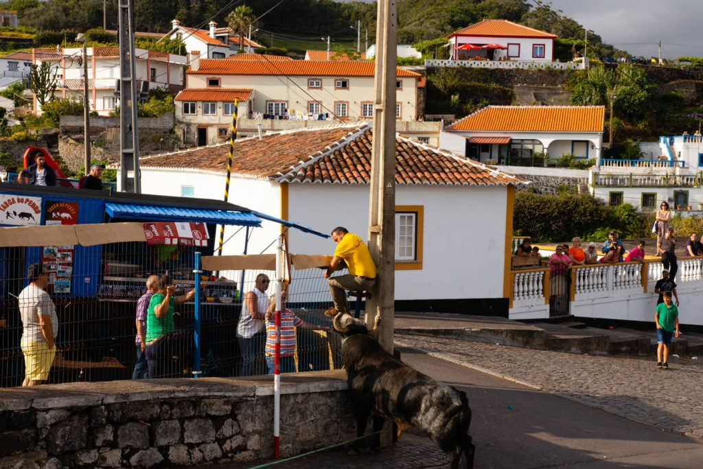 Terceira Azores Bull Fight
