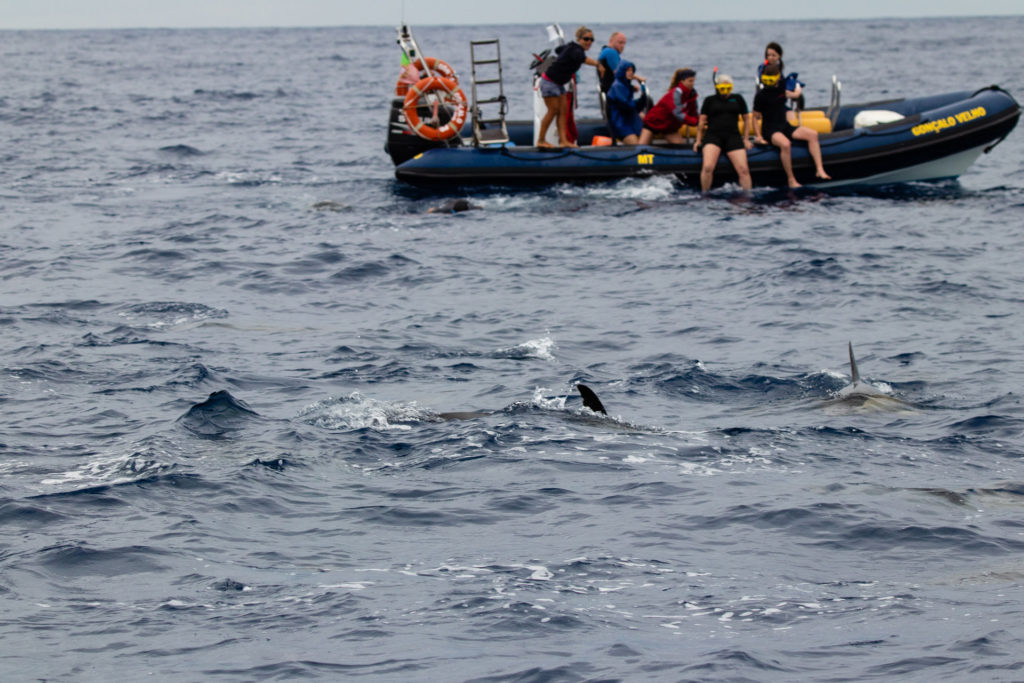 Azores Swimming with Dolphins