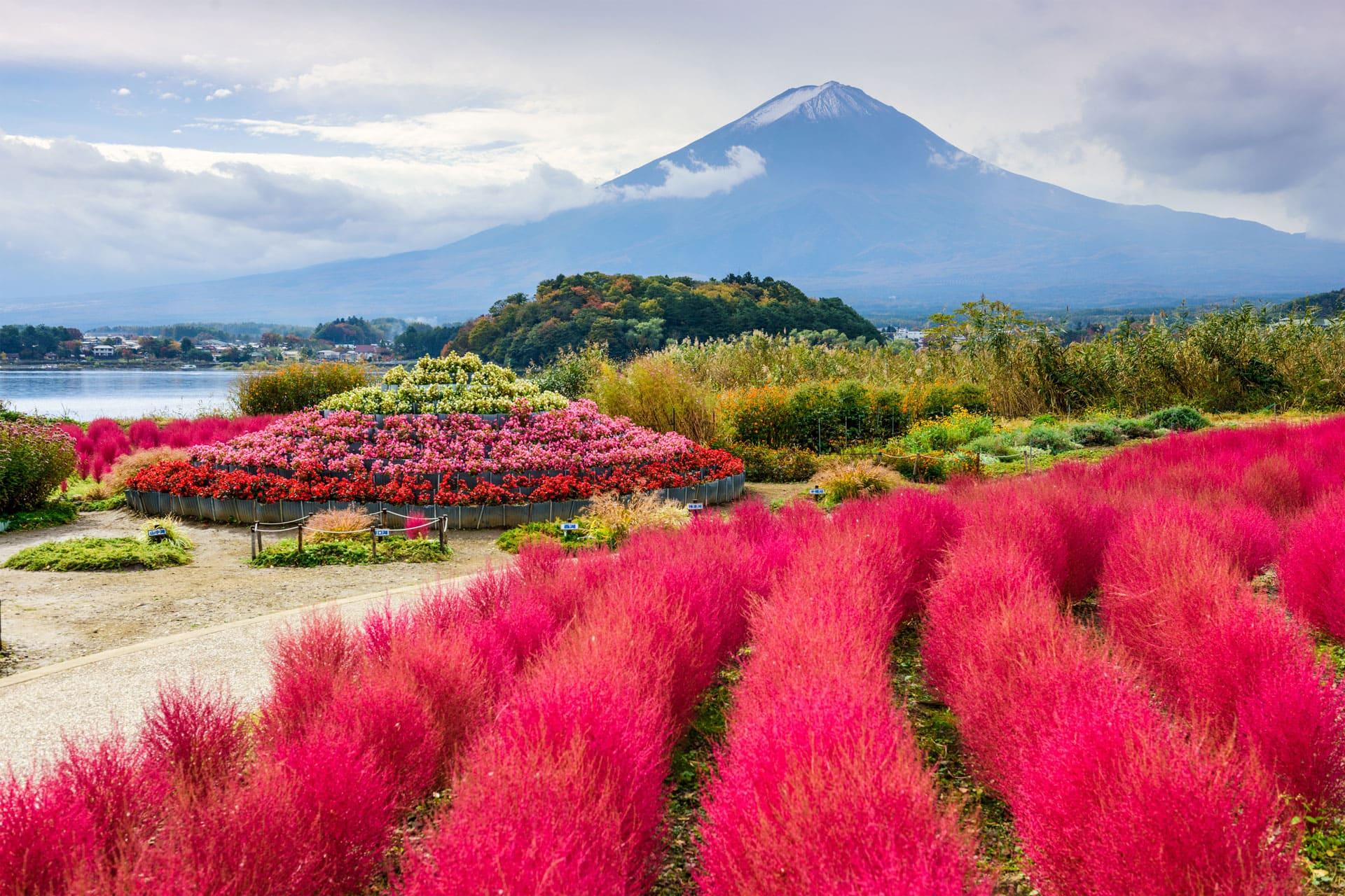 Oishi park Kawaguchiko Mount Fuji Japan