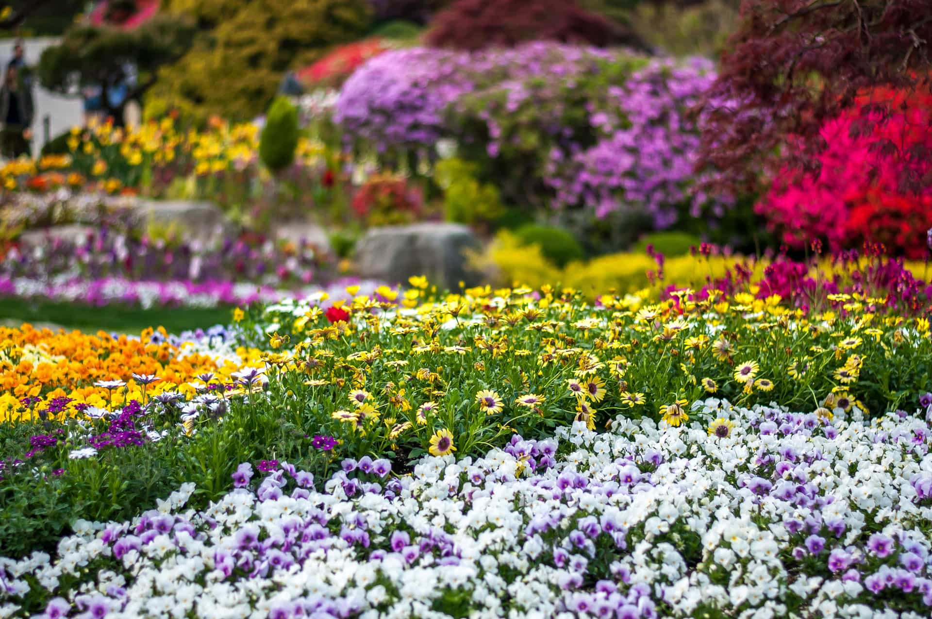 The Garden of Morning Calm South Korea