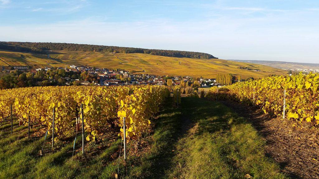 Champagne Region, Epernay, France
