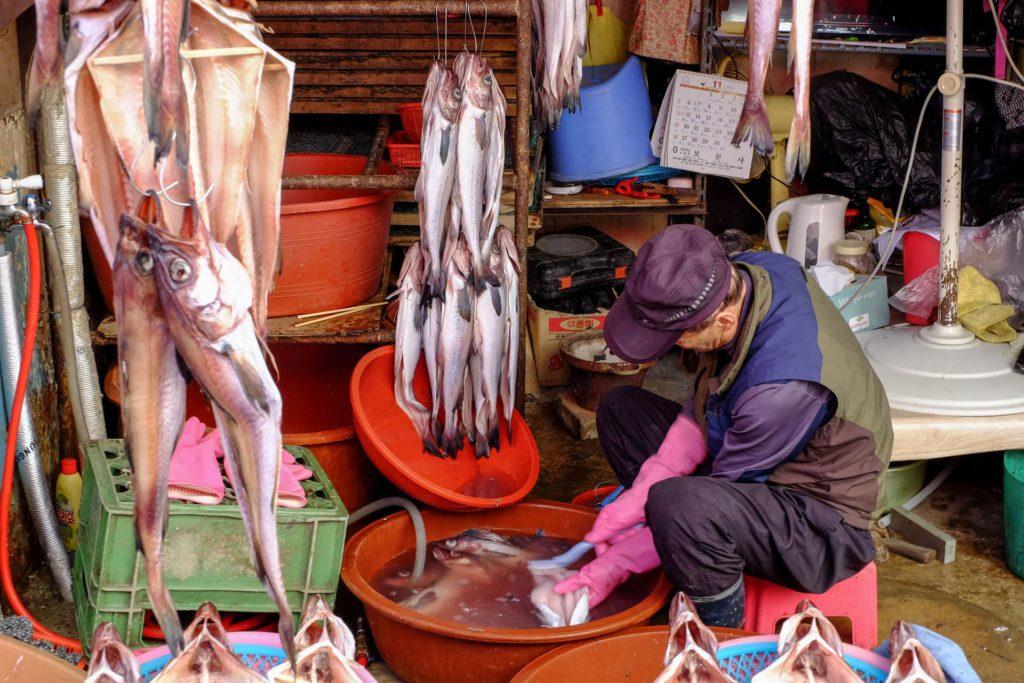 Jagalchi Fish Market Busan South Korea