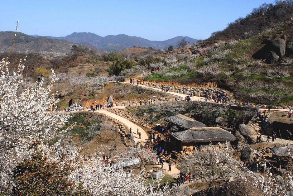 Gwangyang Maehwa Festival in Spring South Korea