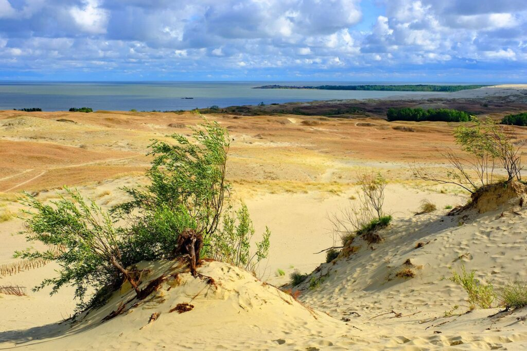Sand dunes in Curonian Spit National Park