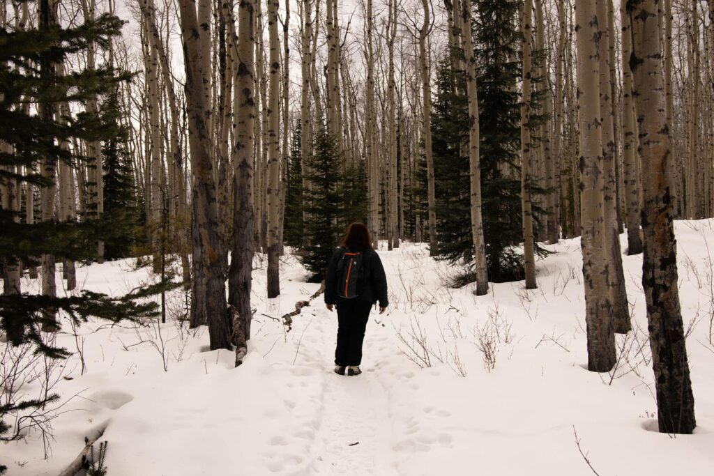 Best Winter Hikes in Lake Louise