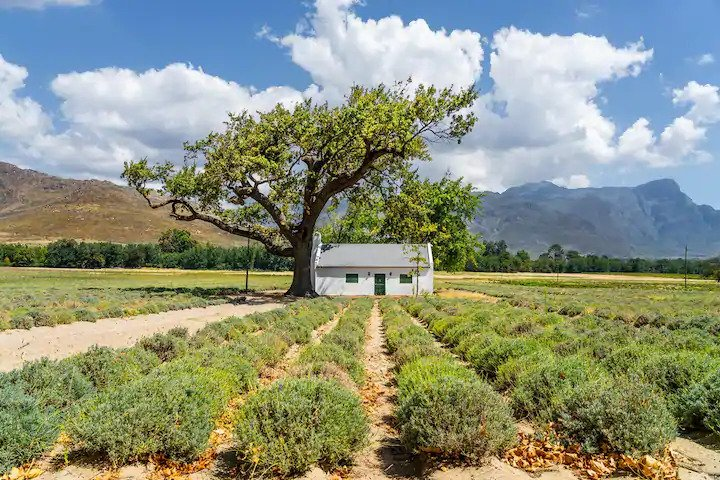 Visiting the nearby wineries in Stellenbosch is a great Airbnb experiece