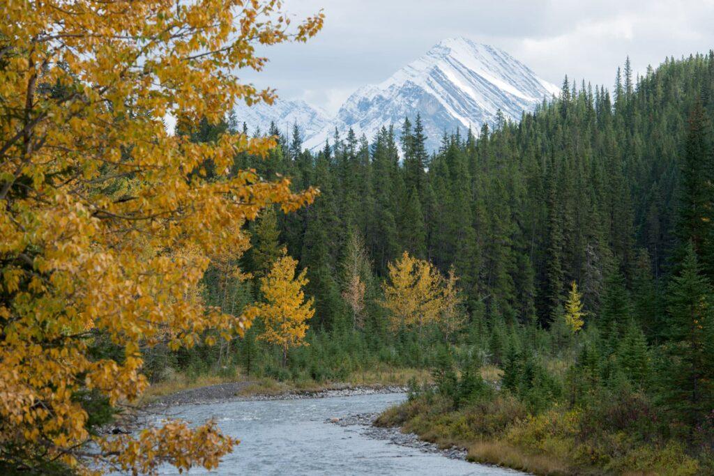 Spray River in Banff