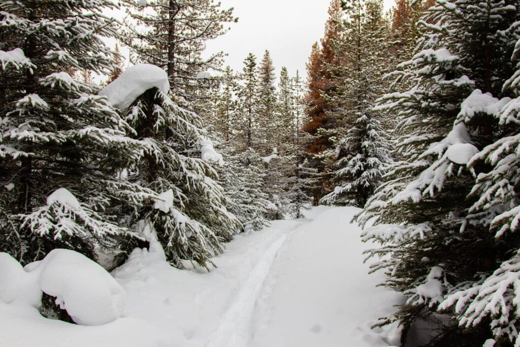 This winter hike leads through beautiful snow-covered trees