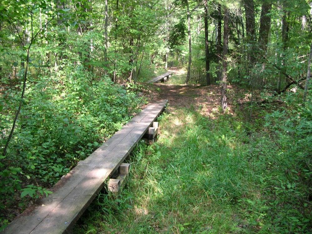 Boardwalks used in the Good Harbor Bay trail in Sleeping Bear Dunes National Lakeshore