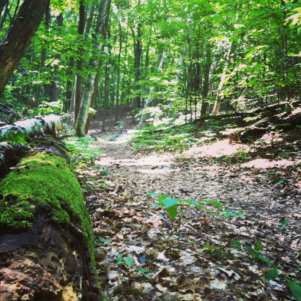 Shaugher Hill Trail