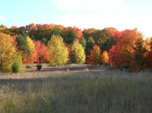 Fall colors seen from the Windy Moraine Trail in Sleeping Bear Dunes National Lakeshore