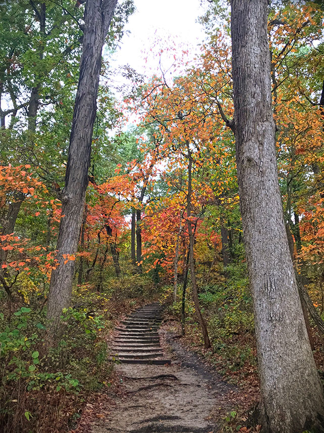 Bluff Trail in Starved Rock State Park