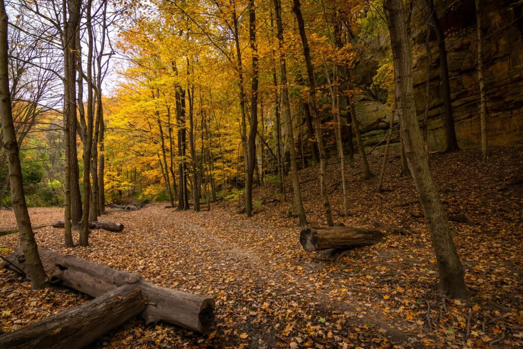 The colorful foliage in Autumn in Starved Rock State Park
