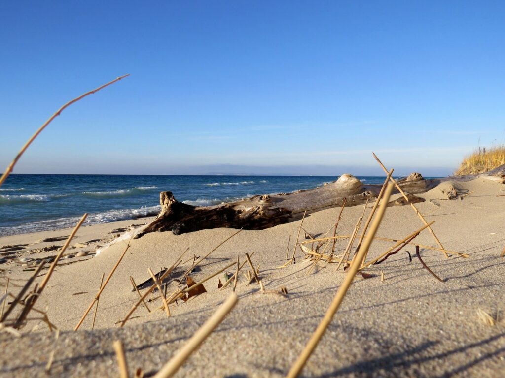 Driftwood at Port Oneida Beach in Sleeping Bear Dunes National Lakeshore