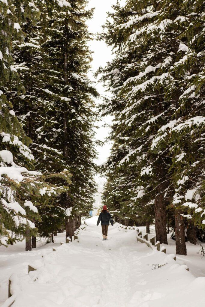 Hiking to the Peyto Lake Viewpoint